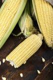 Maïskolven van suikermaïs stock foto