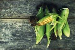 Maïskolven vers graan Stock Foto's