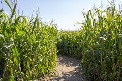 Maïslabyrint Stock Afbeeldingen