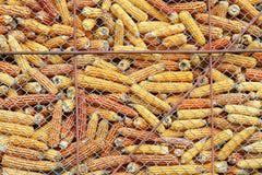 Maïsvoorraad Royalty-vrije Stock Afbeelding