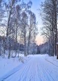 Mañana apacible en un camino forestal - paisaje del rosa del invierno del invierno Imagen de archivo
