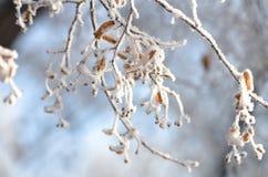Mañana asoleada del invierno fotografía de archivo