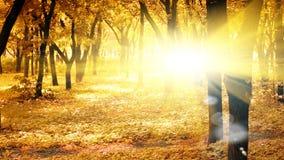 Mañana asoleada del otoño Fotos de archivo libres de regalías