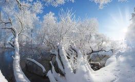 Mañana blanca del invierno Imágenes de archivo libres de regalías