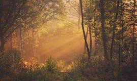 Mañana brumosa del bosque Imagen de archivo libre de regalías