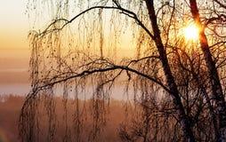Mañana brumosa del invierno Imagenes de archivo