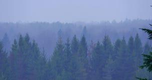 Mañana brumosa del otoño en el bosque almacen de metraje de vídeo