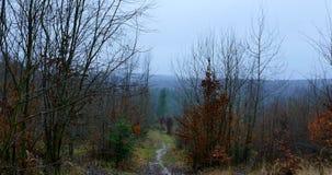 Mañana brumosa del otoño en el bosque almacen de video