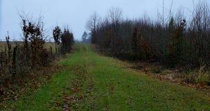 Mañana brumosa del otoño en el bosque metrajes