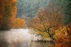 Mañana brumosa del otoño en el río Árboles de abedul amarillo Imagen de archivo libre de regalías