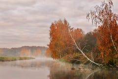 Mañana brumosa del otoño en el río Árboles de abedul amarillo Imagen de archivo