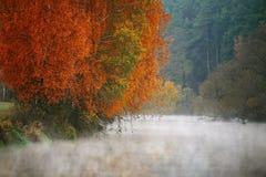 Mañana brumosa del otoño en el río Árboles de abedul amarillo Foto de archivo