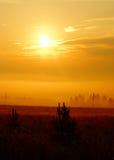 Mañana brumosa del verano, selva virgen rusa Imagen de archivo