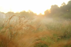 Mañana brumosa en campo Foto de archivo libre de regalías