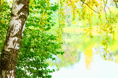 Mañana brumosa en el bosque Imágenes de archivo libres de regalías