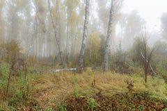 Mañana brumosa en el bosque en la caída Mañana, otoño Fotos de archivo libres de regalías