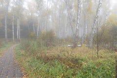 Mañana brumosa en el bosque en la caída Mañana, otoño Imagen de archivo