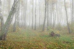 Mañana brumosa en el bosque en la caída Mañana, otoño Fotos de archivo
