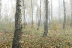 Mañana brumosa en el bosque en la caída Mañana, otoño Imágenes de archivo libres de regalías