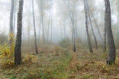 Mañana brumosa en el bosque en la caída Mañana, otoño Fotografía de archivo