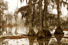 Mañana brumosa en el pantano imagen de archivo