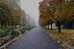 Mañana brumosa en el parque del otoño imágenes de archivo libres de regalías