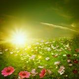 Mañana brumosa en el prado. Foto de archivo libre de regalías