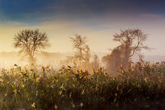 Mañana brumosa en el río Fotos de archivo