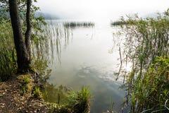 Mañana brumosa hermosa en un lago Fotografía de archivo