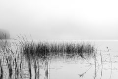 Mañana brumosa hermosa en un lago Foto de archivo