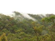 Mañana brumosa sobre bushland fotografía de archivo
