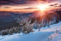 Mañana colorida del invierno en las montañas Cielo cubierto dramático Vista de los árboles nevados de la conífera en la salida de Foto de archivo
