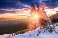 Mañana colorida del invierno en las montañas Cielo cubierto dramático Vista de los árboles nevados de la conífera en la salida de Imagen de archivo libre de regalías