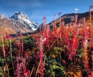 Mañana colorida del otoño en las montañas del Cáucaso Fotos de archivo