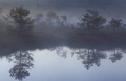 Mañana con niebla en el pantano imagen de archivo libre de regalías