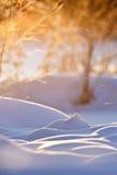Mañana de congelación Fotos de archivo libres de regalías