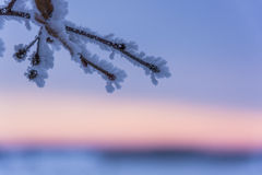 Mañana de congelación del invierno Imágenes de archivo libres de regalías