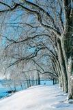 Mañana de congelación del invierno por el lago fotos de archivo libres de regalías