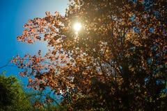 Mañana de la naturaleza de las montañas de la salida del sol bajo punto de vista tres Paisaje del senderismo de la montaña Nadie  Imagen de archivo libre de regalías