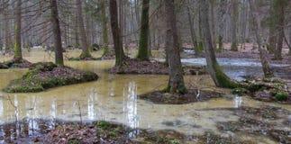 Mañana de la primavera en bosque del humedal Fotografía de archivo