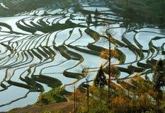 Mañana de la terraza del arroz de YuanYang Imagen de archivo