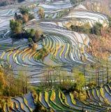 Mañana de la terraza del arroz de YuanYang Fotos de archivo