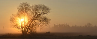 Mañana de niebla Imagenes de archivo