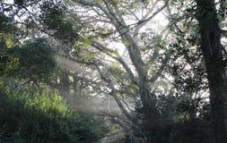 Mañana de niebla Imagen de archivo