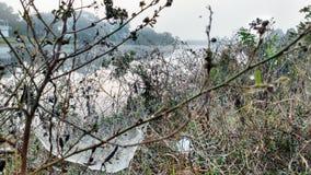 Mañana de niebla con los spiderwebs Fotos de archivo