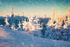 Mañana de niebla del invierno en las montañas cárpatas Fotografía de archivo libre de regalías