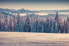 Mañana de niebla del invierno en las montañas cárpatas Imagen de archivo libre de regalías