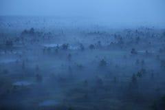 Mañana de niebla del pantano Fotos de archivo libres de regalías
