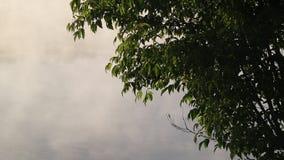 Mañana de niebla del verano con el birdsong, pájaros que cantan, usignuolo, birdsong de la primavera almacen de video