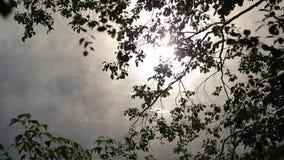 Mañana de niebla del verano con el birdsong, pájaros que cantan, usignuolo, birdsong de la primavera almacen de metraje de vídeo